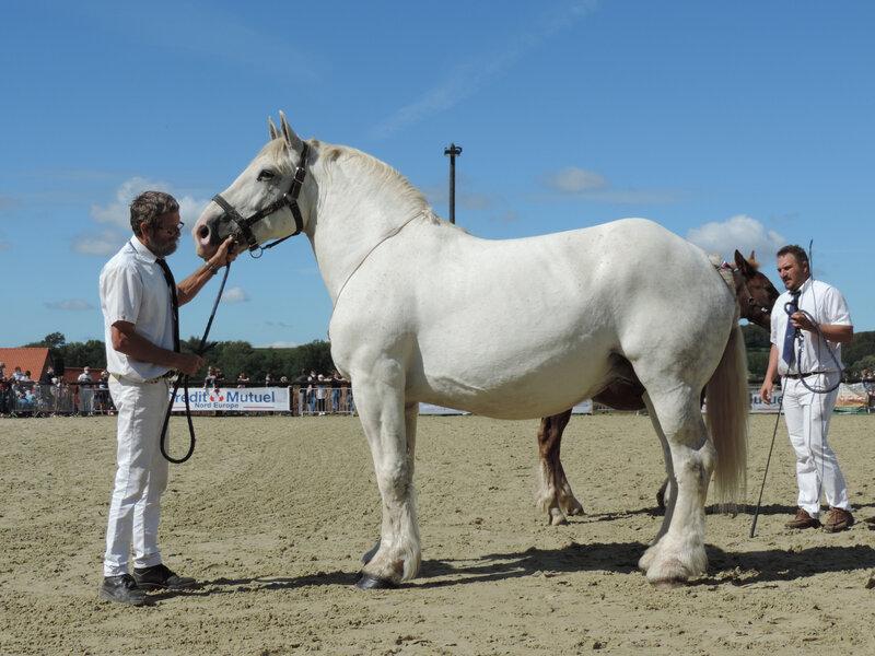 Roxane de Tourville - 6 Septembre 2020 - National Boulonnais - Samer (62) - 8e (Suitées (13 à 18 ans))