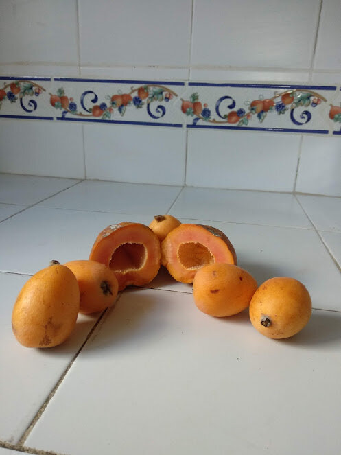 Smoothie de papaye et nèfles (2)