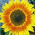 fleurs 0685 (50)