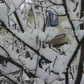 neige (28)