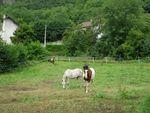 chevaux_07082011_001