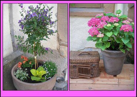 fleurs dans la courette1