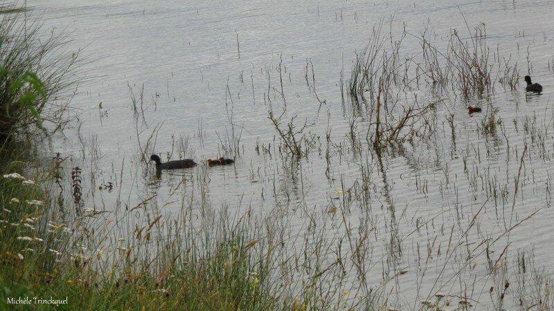 Lac Puydarrieux 1406163