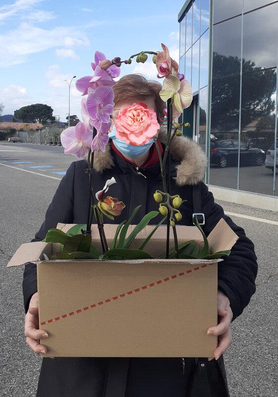 Orchidées (22)