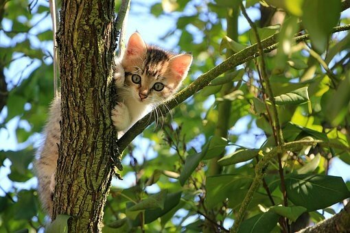chaton arbrez