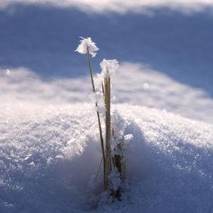 neige_janvier_2010_photo_01