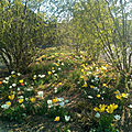 Parterre de printemps