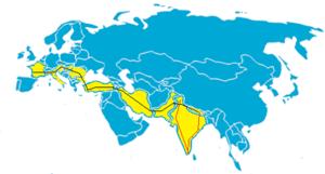 carte-monde - Copie