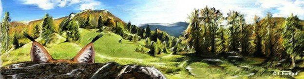 40 ans du retour du lynx dans le Jura Lucile Fenger