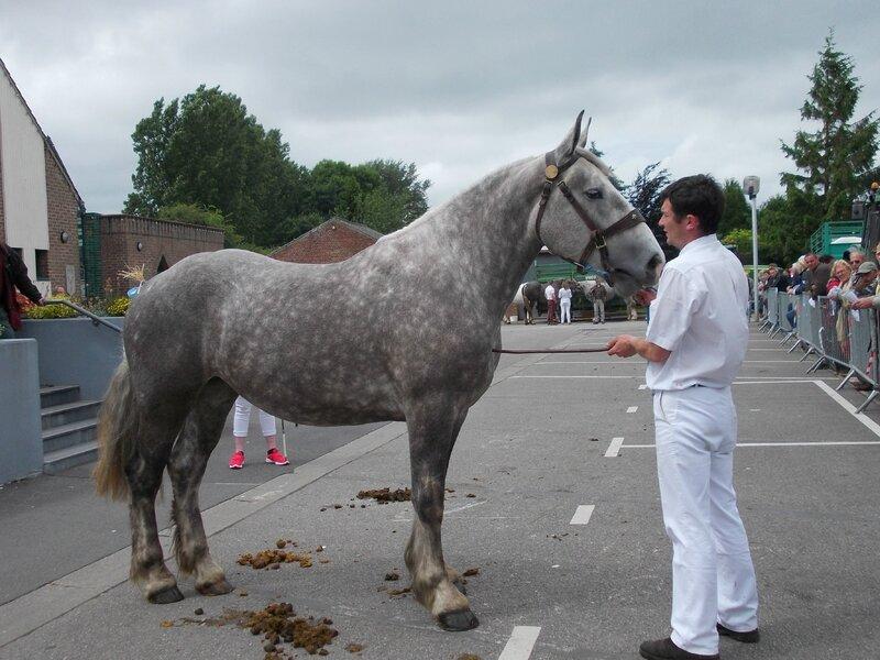 Etoile de la Lys - 21 Juin 2016 - Concours d'élevage local - Thérouanne - 5e (2 ans)