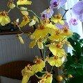 Orchidee en pension