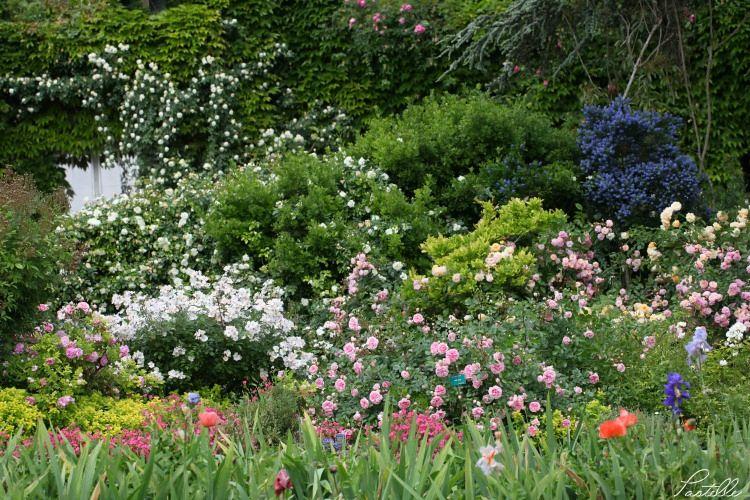 Jardin mélange_13 11 06_4360
