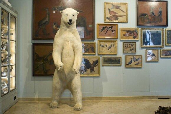 Paris-Museum-Musee-de-la-chasse-et-de-la-nature-oursblanc