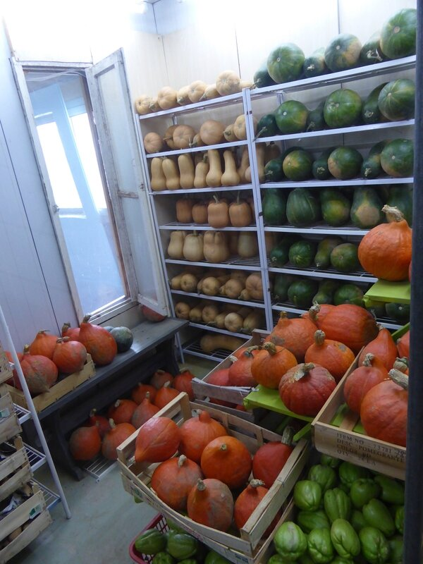 22-courges 2014 (2)