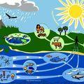 2010 : année de la biodiversité
