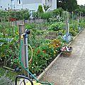 Jardins partagés de tarnos, une grande réussite