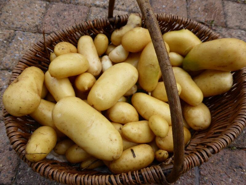 15-pommes de terre (1)