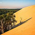 dune et foret