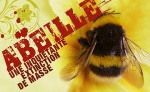 disparition-des-abeilles-en-masse