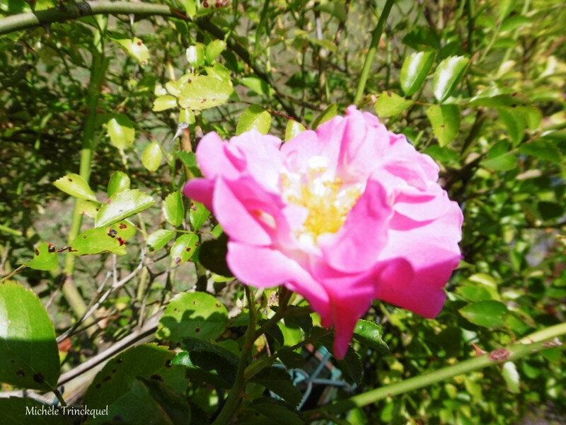 1-Fleurs de Léon 09072019