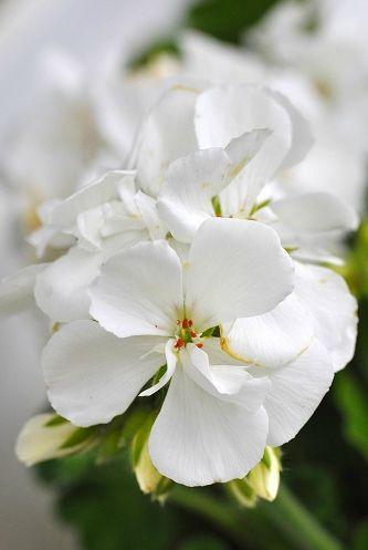 fleurss