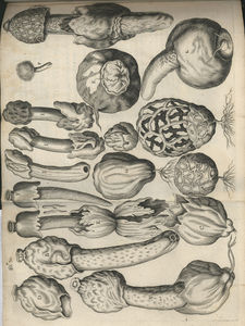 sterbeeck_plate