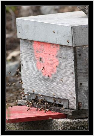 2010_06_01_Les_abeilles_devant_les_ruches__4_