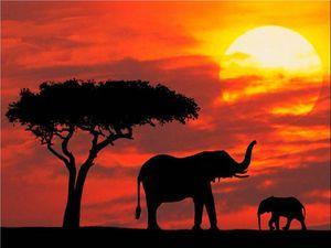 coucher de soleil 4-Elephants