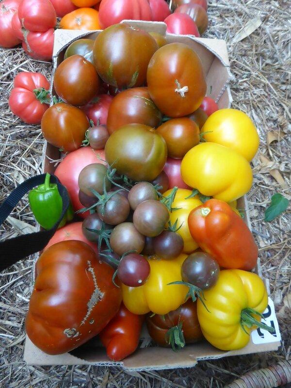 28-tomates (5)