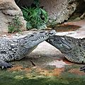 la ferme aux crocodile (6)