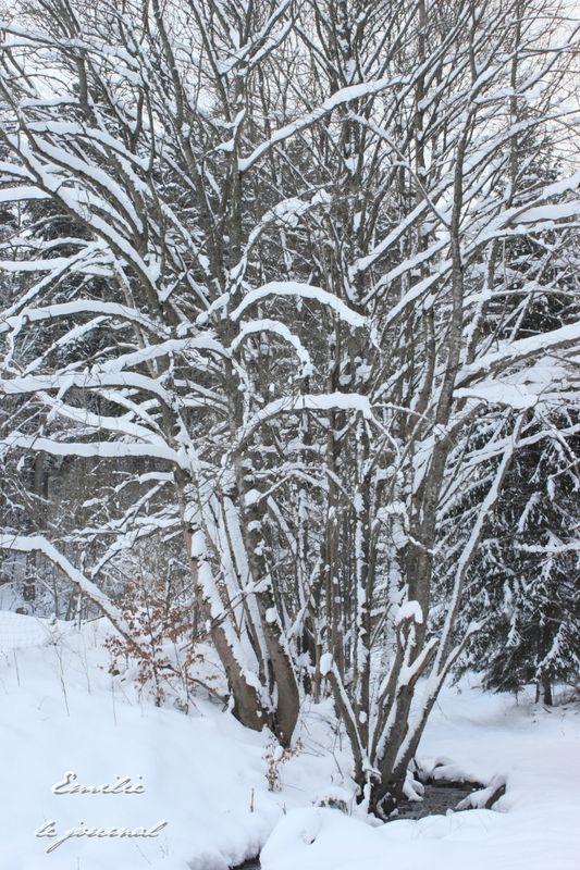 Hohwald neige11