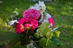 01_bouquet_11_07_01_013