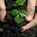 كيف حث الإسلام على الزراعة والغراسة من خلال القرآن والحديث والفقه, محمد بن أحمد الأمراني