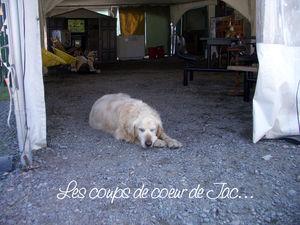 chien_vieux