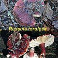 Russula torulosa