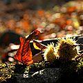 Châtaigneraie en automne