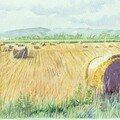 Rouleaux dans la plaine de l'Allier