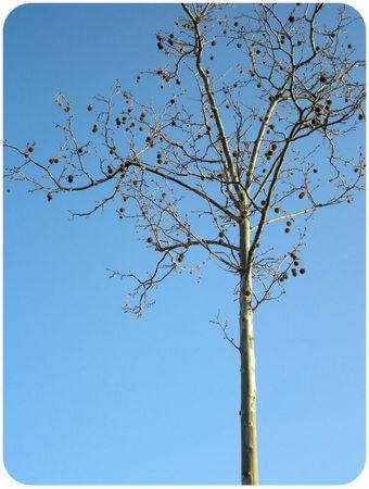 arbrebus