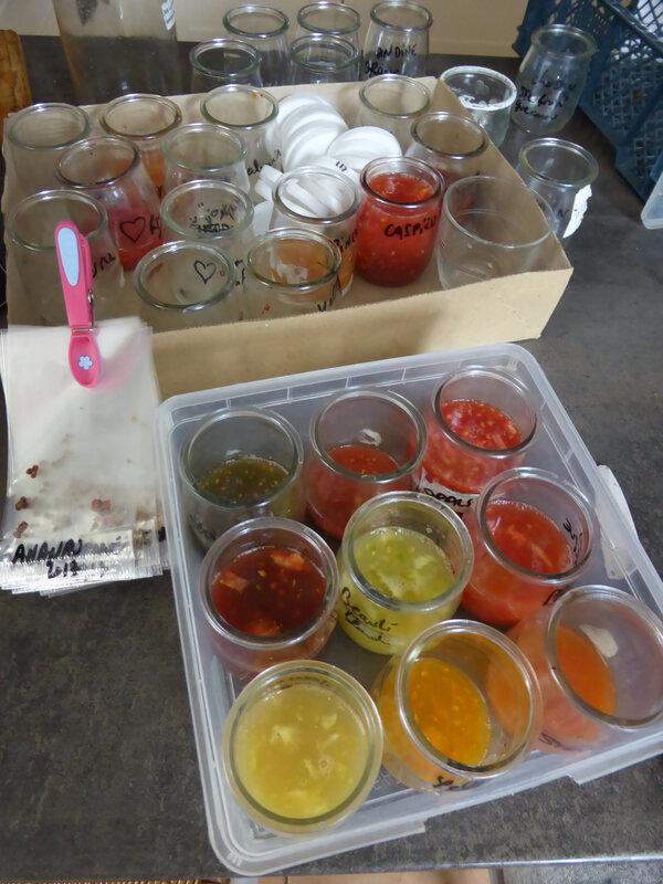 20-tomates, graines (3)