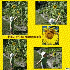 photocollagetournesol