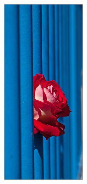 ville rose rouge grille bleue 010713