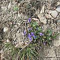 A9 savel mars 2015 001 03-02-2008 18-39-19