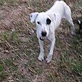 Jeune chienne et 2 bb 21