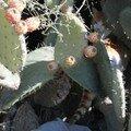 chat-cactus