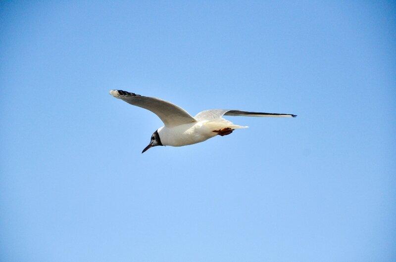 Oiseau sur chasses
