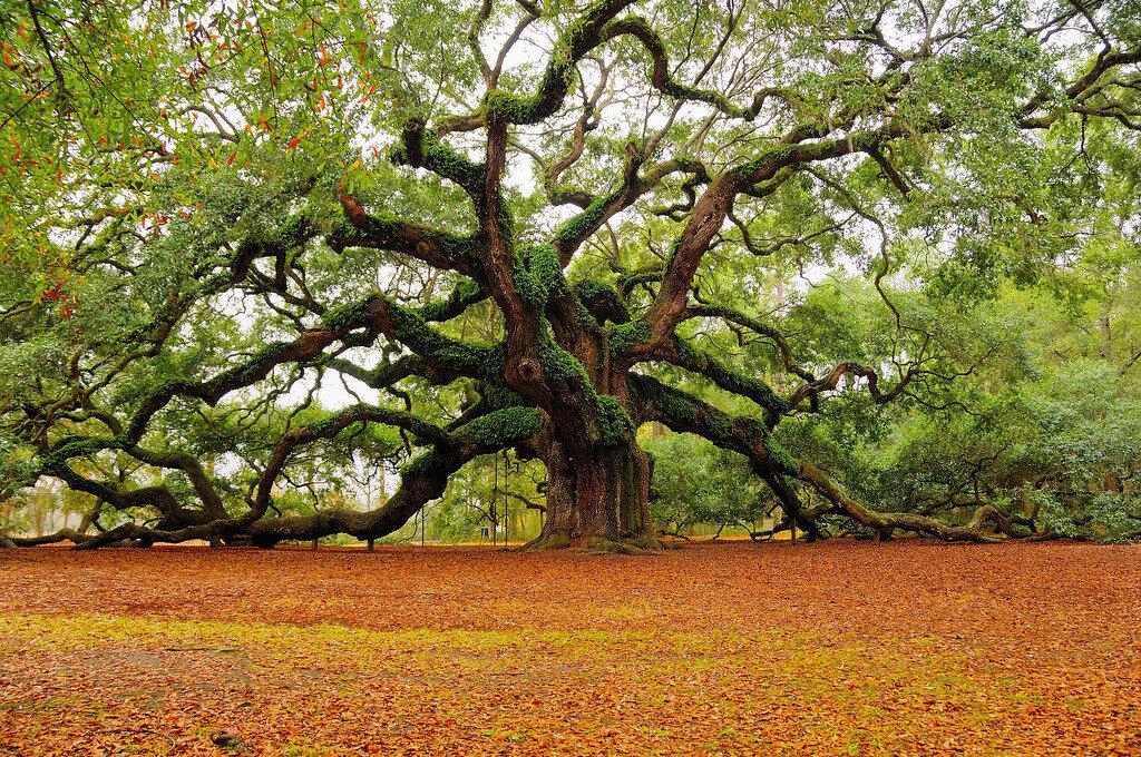 le-«-nouvel-an-des-arbres-»