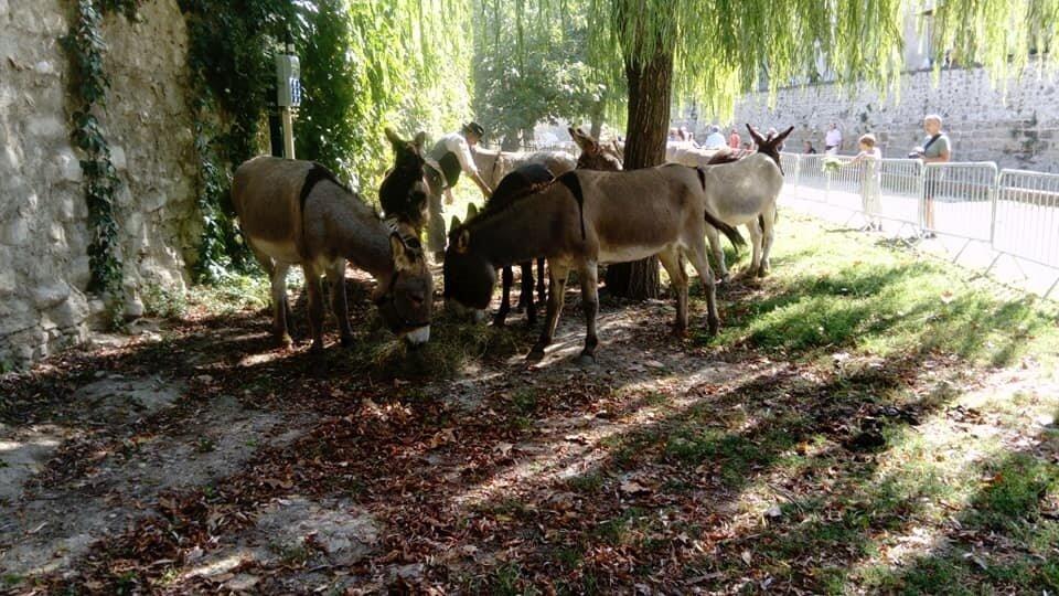 La fête des ANES à Pernes les fontaines - Vaucluse