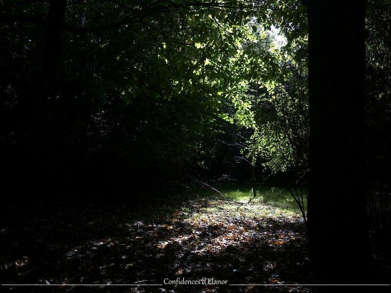 Jardin - Sept (5)