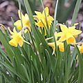 Album-photo des fleurs de mon jardin