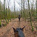 Balade à cheval dans la forêt P1080209